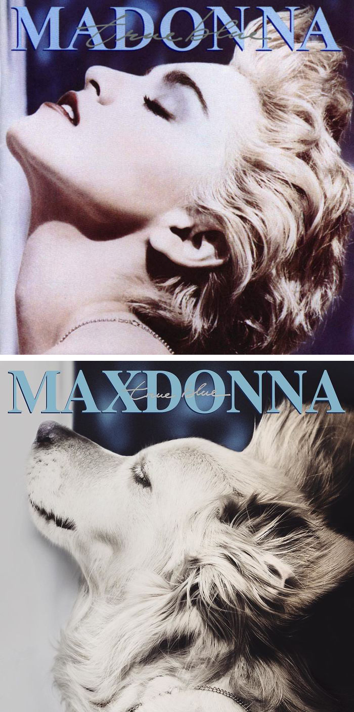 This Dog Recreated Madonna's Iconic Photos