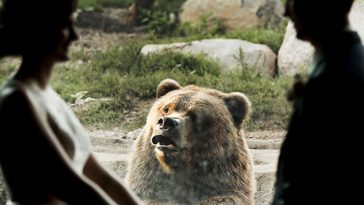 The Internet Is Cracking Up Over This Bear's Reaction To This Couple Getting Married At The Zoo