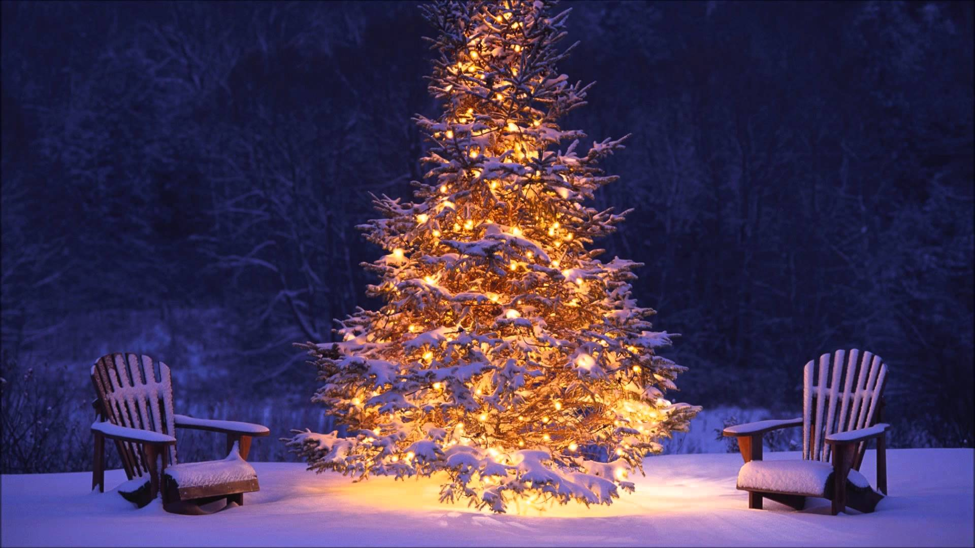 Christmas Tree Light Image HD Wallpaper