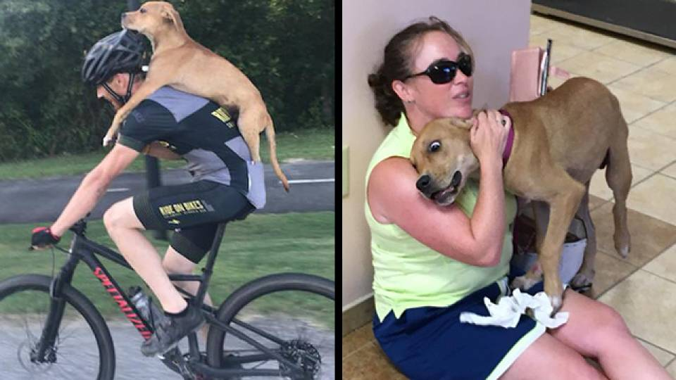 Hero Cyclist Saves Injured Stray Puppy On Roadside