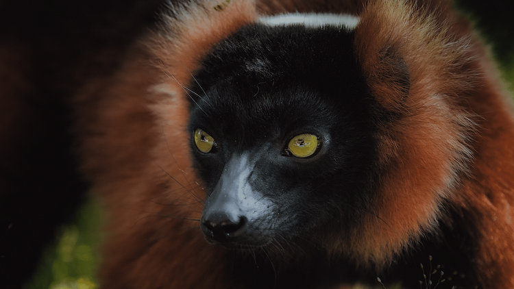 Incredible Photos of Madagascar Wildlife Animals by Ben Simon Rehn
