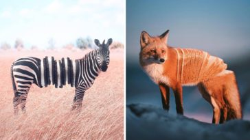 Surreal Photo Mash-Ups Cleverly Blend Animals with Food and Unexpected Objects