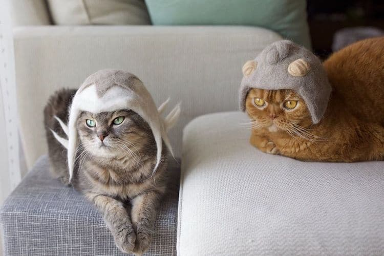 Pet Owners Turn Their Kitties' Fluffy Fur into Tiny Hats for Cats